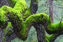 Moss  Gardening / Well, not all relate to Moss Gardening....  / by Sam Pryor