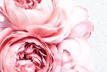 Floral Closeups