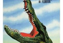 Alligator Friends