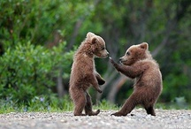 POOH BEAR, BLACK BEAR. POLAR BEAR....... / by Anne Csak