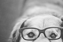Dog photography / by Veronique Tremblay