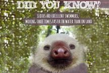 Did you know - Animal Facts / Maybe you will learn something new?