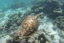 Volunteer Belize / Belize is an amazing place for marine life, exotic scenery and amazing volunteers!