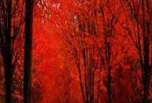 trees / by Pamela Nebeker
