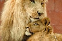 Animalia ♡ / Beautiful Creatures Big and Small