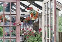 in the Greenhouse...