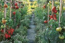in the Veggie Garden