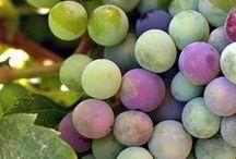 Vinyards~ Wine~ Wine Cellars  / by Bernice (Bernie) Gilreath