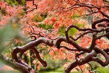 AwesomeTrees