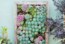 Mi pequeño jardín / My little garden / - Plantas - - Plants -
