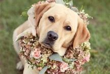 Pets & Animals / Ideas for including your pets or animals in photography, ceremonies, and more / by Plan It Event Design & Management