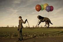Dogs in art. / Art, drawings, paintings and sculpture with dogs.
