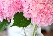 Spring Fling / by alison harrell