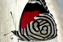 Butterfly / by Ena Newell