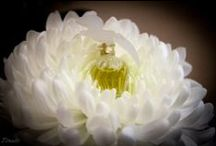 Perfums and flacons