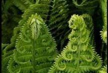 Moss&ferns