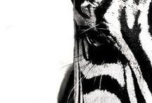 Zalando ♥ Black & White