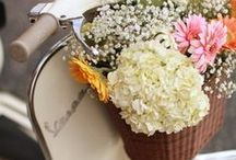 S P R I N G / Fresh, flowers spring blossoms. #PevoniaLife