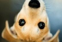 Cute / by Angela Lynn