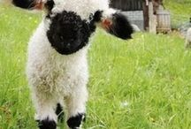 On The Farm / by Dorita