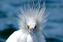 Birds, birds, birds! / Who knew there was such diversity in the bird kingdom?