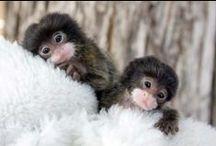 Animals:  Always Fascinating / Lover of Wildlife