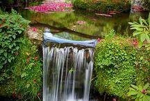 Garden  / お気に入り庭風景 / by Ritsuko