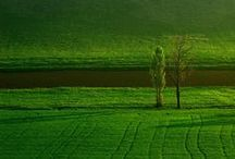 The green earth / by Ritsuko