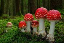 Mushroom / by Ritsuko