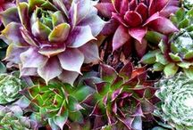 Succulents / So many kinds of succulents!