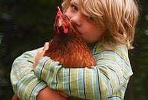 chickens / by Dorita