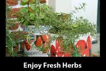 Herbs and Spices / by Dorita