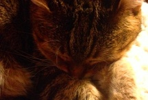 My Girls! / My two tabby cats are cute as buttons and so very sweet.
