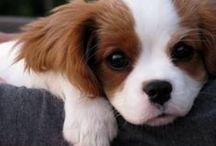 Precious puppies / by Debbie