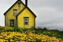 yellow / by Kelly Schmidt