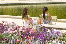 Garden Travel / by mtbluestocking ~
