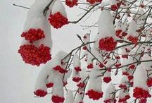 Winter Beauty / Beautiful snow photography
