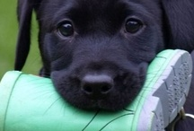 Pups / by Aubrey Rae