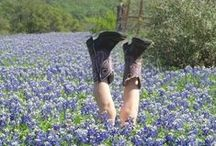 Texas Bluebonnets / I want to sleep on the hard ground, in the comfort of your arms, on a pillow of bluebonnets, in a blanket made of stars.  Oh, it sounds good to me (Cowboy Take Me Away, Dixie Chicks).  PLEASE, no more than 10 pins per board. / by Judy Crovisier