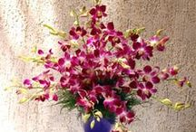 Send Flowers to Mumbai / My designs delivered fresh and a personalized service to Mumbai