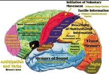 The Amazing Brain / This is a collection of diagrams of the brain, pictures from articles about neuroscience, MRI's, and just really interesting things about our amazing brain!