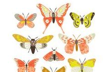 Illustrations l Butterfly