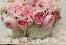 flowers / by Meya Sanyang