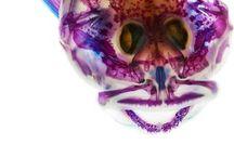In the Eye of the Beholder / Beauty is... / by Paleo_Bonegirl