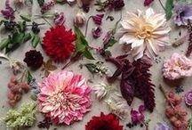 B O T A N I C A L / For my inner florist and eventual gardener-self.