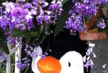 Flowers/Purple / I am happy to share. Please feel free to pin whatever you like with any caption you please. No daily or other limits! / by Mimmi Penguin