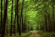 Trees / by Karina Werner