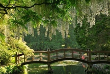 Gardens and Other Outdoor Beauty / by Karina Werner