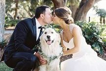 Pets at Weddings / Animal fan? Check out these cute photos of pets at weddings and get ideas for how you can include your dogs, cats and any other fluffy friends in your big day!