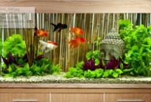 A Far Eastern aquascape / Follow our step-by-step aquarium project, which takes on a Far Eastern theme for your pet fish!